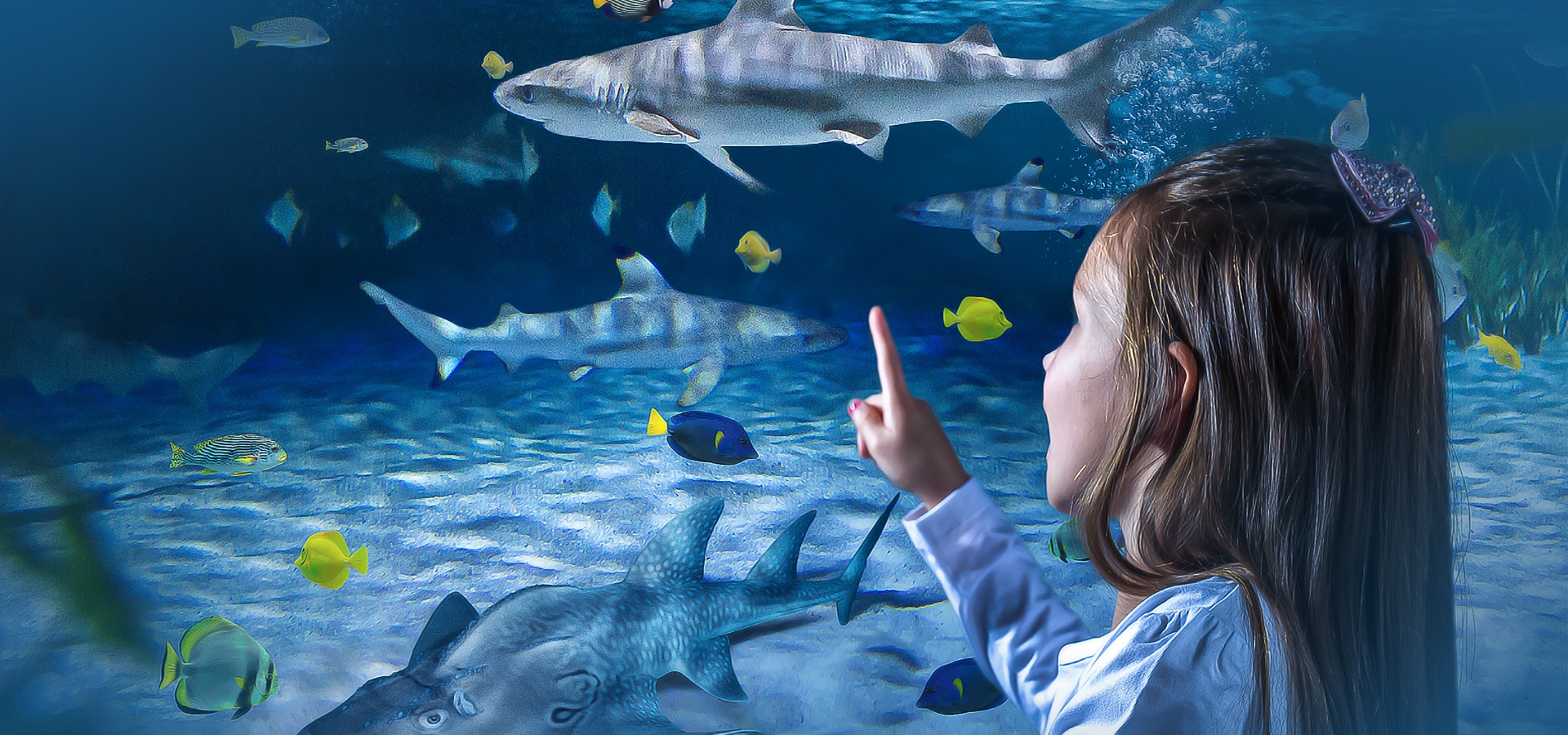 Girl pointing at sharks in a tank at SEA LIFE Blackpool